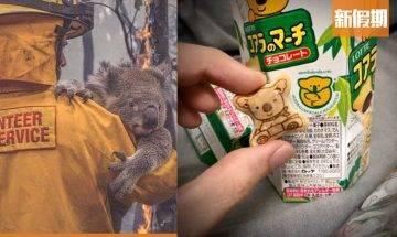 購買樂天熊仔餅可救澳洲樹熊!澳洲山火盡毀動物家園 全城集氣簡易拯救方法+捐款連結 網絡熱話