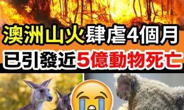 澳洲山火恐引近5億隻動物死亡!|#網絡熱話