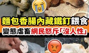 惡意對流浪動物餵食內藏鐵釘的食物,令人髮指!|#網絡熱話 ===