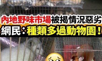 內地野味市場被揭情況惡劣 雪狐、梅花鹿淪為食物|#網絡熱話�