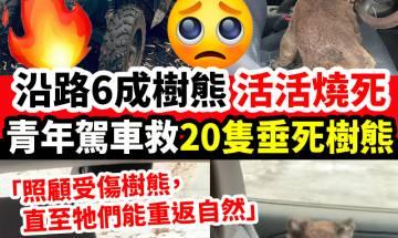 青年駕車勇救20隻樹熊!|#新假期網絡熱話