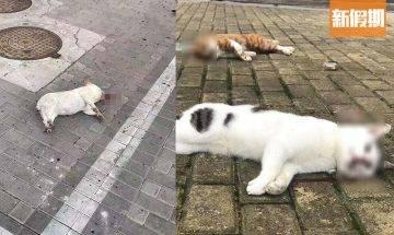 【誤信謠言】憂寵物感染武漢肺炎傳染自己 狠心大陸主人將5隻貓扔落樓慘死|網絡熱話