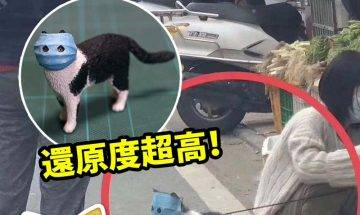網絡爆紅嘅口罩貓被實體化!超搞笑,希望將來會出扭蛋啦!|#網絡熱