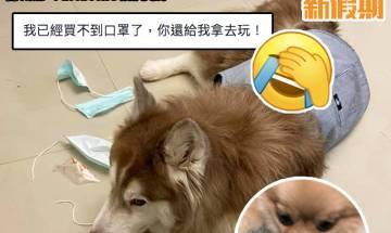 狗狗誤以為口罩係玩具 主人好崩潰!|#網絡熱話