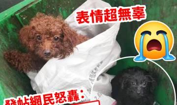 近日有微博網民在武漢發現兩隻狗狗被丟棄在垃圾桶,兩隻狗狗神情超無