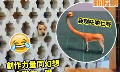 創意無極限!「長頸狗」被實體化|#網絡熱話 ==========