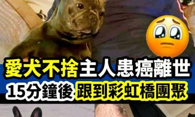 愛犬在主人離世後,15分鐘後也相繼身亡。 #新假期網絡熱話