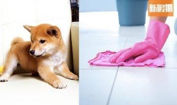 【新冠肺炎】滴露消毒會令寵物中毒+患癌!家有貓狗 家居清潔要注意+獸醫教路正確消毒方法|好生活百科
