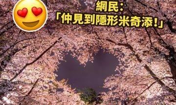 浪漫櫻花絕景|#旅遊看世界 ============ 雖然疫