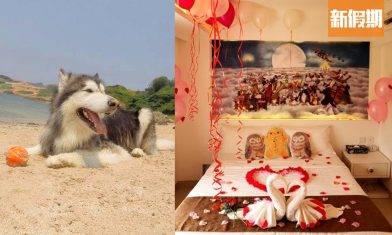 南丫島渡假屋推介2020 無敵海景+寵物友善酒店 帶毛孩去沙灘游水 香港好去處