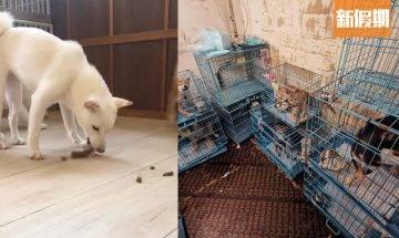 豆柴Cafe被爆疑似虐狗 柴犬被困窄籠層層疊 店方回應:誣衊抹黑|網絡熱話