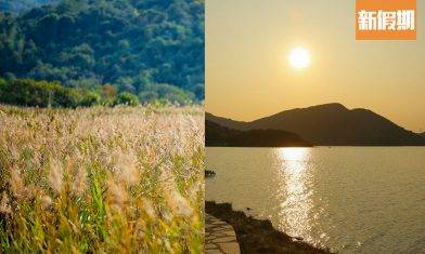粉嶺輕鬆行山徑 鹿頸至谷埔  金黃蘆葦田打卡聖地+在地食材農家菜|周末遊懶人包