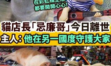 【#網絡熱話】|尖東報攤貓店長「忌廉哥」離世