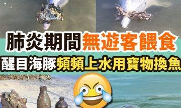 【#網絡熱話】|醒目「送禮豚」頻上水用寶物換魚