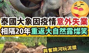 【#網絡熱話】|因疫情「失業」大象相隔20年再回家!