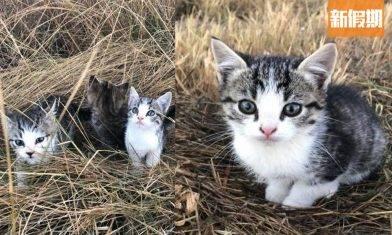 10隻可愛小奶貓遭遺棄!澳洲女子散步遇見貓貓 全數飛奔尾隨1.6公里回家!|網絡熱話