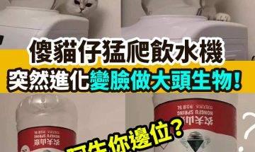 【#網絡熱話】|傻貓仔進化變大頭生物!