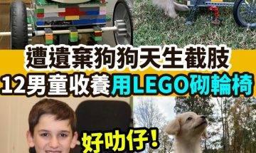 【#網絡熱話】|男童用LEGO幫愛犬砌輪椅