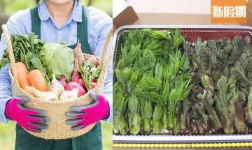 日本蔬菜輻射超標4倍!日本機構抽查網購食材 福島以外縣市同樣高危|網絡熱話