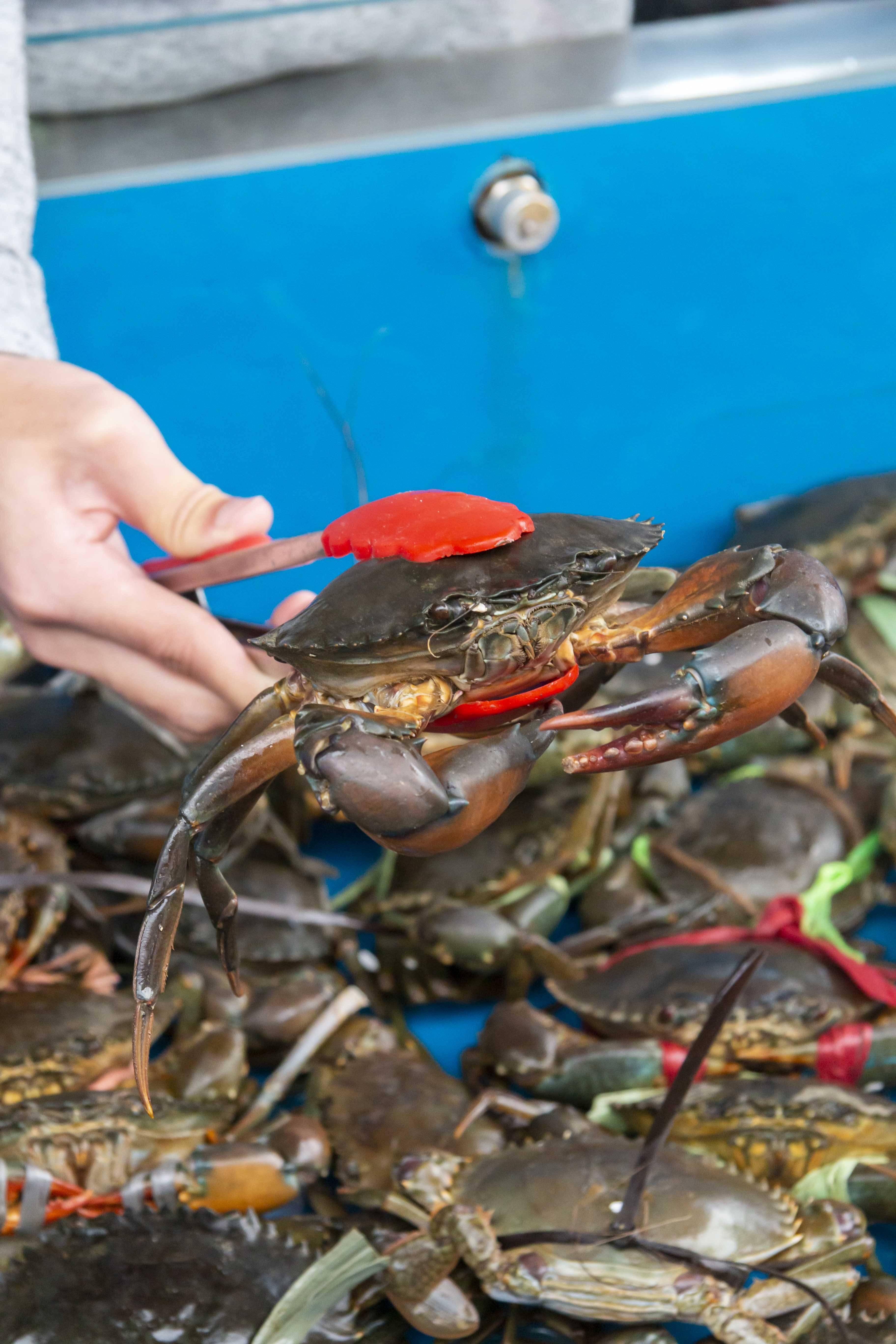 客人可到水池任捉肉蟹。