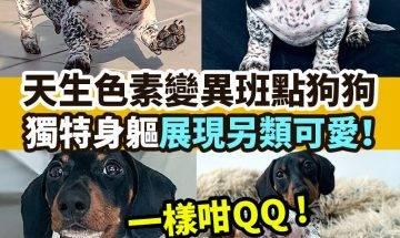 【#網絡熱話】|天生色素變異狗狗