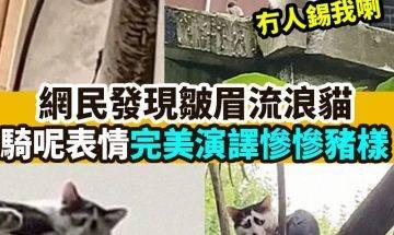 【#網絡熱話】|網民發現皺眉流浪貓