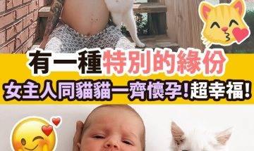 【#療癒時間】女主人同貓貓一齊懷孕,超幸福!