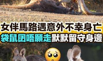 【#網絡熱話】|袋鼠囝留守逝世伴侶
