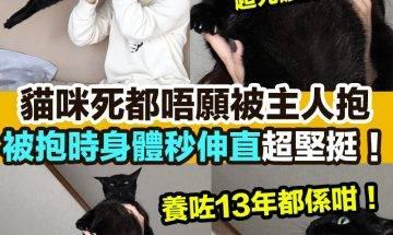 【#網絡熱話】|貓咪被抱身體秒伸直!
