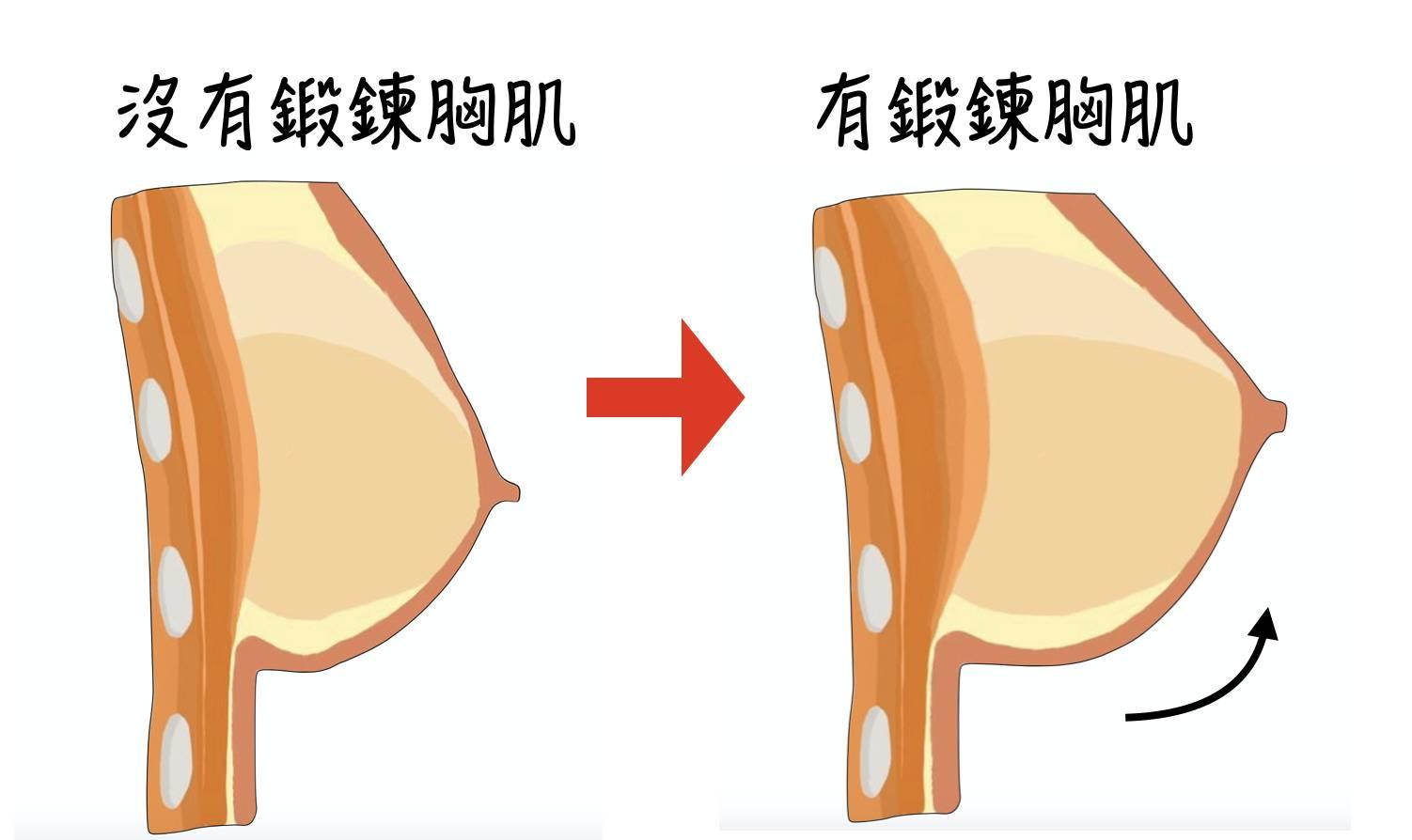 女生絕對能在現有的脂肪下建立厚厚的胸肌!