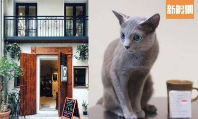 大坑2層高百年古宅改造 寵物友善Cafe Sonne CAD!本地炒豆 虹吸式咖啡+Cold Brew玻璃樽|區區搵食