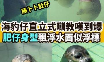 【#網絡熱話】|懶瞓海豹仔水中瞓教