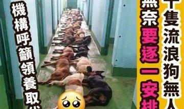 【#時事熱話】過20隻流浪狗無人收養