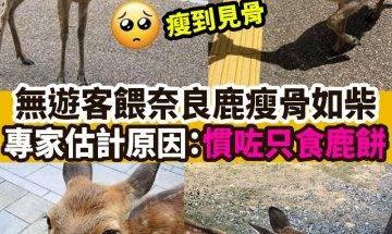 【#網絡熱話】無遊客餵奈良鹿瘦骨如柴