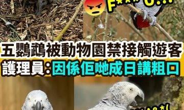 【#網絡熱話】鸚鵡被動物園禁接觸遊客