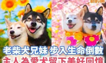 【#網絡熱話】主人為老柴犬拍下美好的回憶