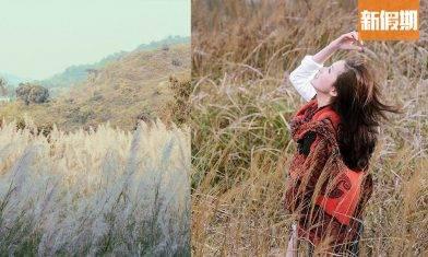 芒草季節2021!香港7大賞芒行山好去處  大東山/飛鵝山 浪漫芒草海+耶穌光日落+雲海 附交通詳情|香港好去處