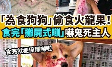 【#網絡熱話】「為食狗狗」嚇死主人!
