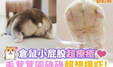 【#網絡熱話】圓潤Pet好似糯米滋!