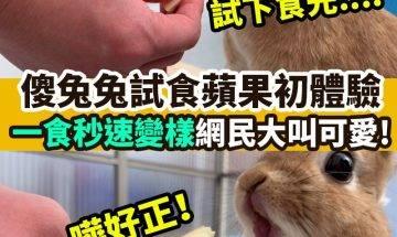 【#網絡熱話】|兔仔食蘋果秒速變臉!