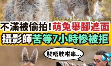 【#網絡熱話】|超萌雪兔拒絕偷拍 以腳擋面怒吼攝影師