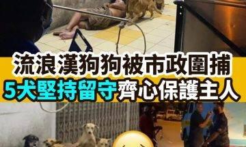 【#網絡熱話】 流浪漢狗狗被市政圍捕