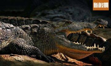 Hermès澳洲興建巨型鱷魚工廠!養殖5萬條鱷魚+生劏剝皮做手袋 環團大反對! 網絡熱話
