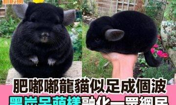 【#網絡熱話】|黑媽媽龍貓超萌!