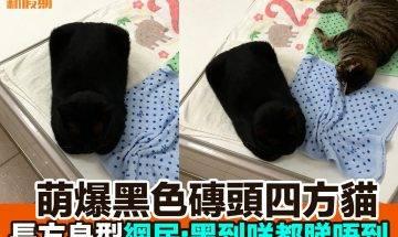 【#網絡熱話】|超強掩眼法黑色枕頭貓貓
