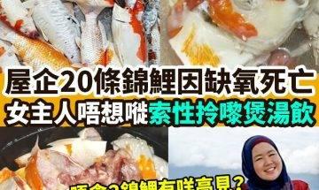 【#網絡熱話】|20條錦鯉過身女主人煮嚟食