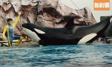 海洋公園11個經典景點逐個捉 香港人集體回憶!越礦飛車/五彩天梯/殺人鯨海威小姐 邊個最深刻?|時事熱話