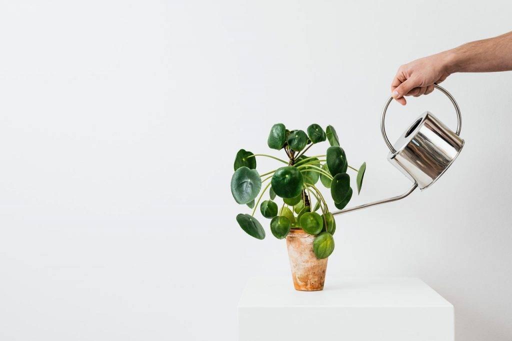 本年西南之位忌綠色植物或五行為木的物品。