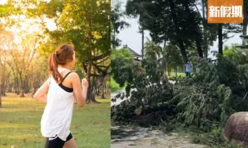戴降噪耳機跑步 聽不到樹木斷裂聲惹恐怖意外 婦人慘遭活活壓死 |網絡熱話