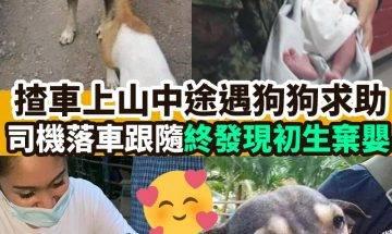 【#網絡熱話】|揸車上山中途遇狗狗求助